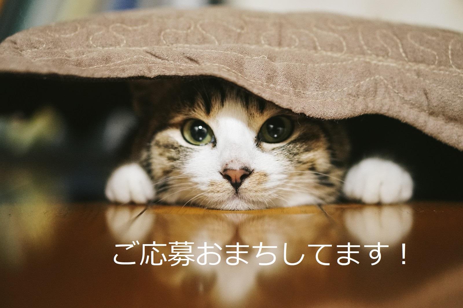 【神奈川県伊勢原市の求人】キレイなオフィスでの入力作業